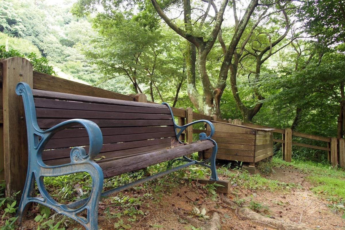 自然の中のベンチ